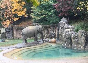THE NATIONAL ZOO IS PART OF THE SMITHSONIAN INSTITUTION in Washington D.C.