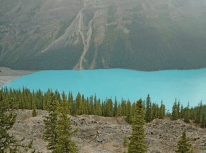 The Grandest View of Turquoise Bow Lake Lining the Icefields Parkway